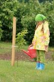 Het water geven van het meisje appelboom Stock Afbeeldingen