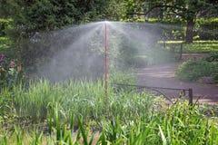 Het water geven van installaties in het bloembed Stock Afbeeldingen