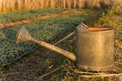 Het water geven van pot in tuin Royalty-vrije Stock Afbeeldingen