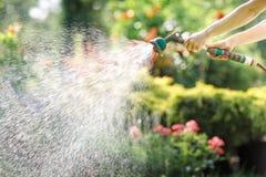 Het water geven van tuinbloemen met slang stock foto