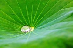 Het water op de lotusbloembladeren royalty-vrije stock afbeelding