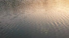 Het water stroomt in de avond stock video