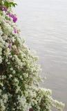 Het water van de bloemenrand Stock Foto