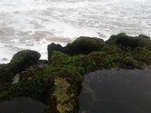 Het water van de de vissenrots van het aardstrand Stock Foto