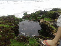 Het water van de de vissenrots van het aardstrand Royalty-vrije Stock Foto