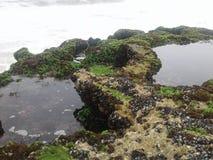 Het water van de de vissenrots van het aardstrand Stock Afbeelding