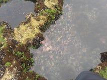 Het water van de de vissenrots van het aardstrand Stock Foto's