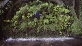 Het water van de parkfontein stock video