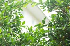 Het water van de regendaling op groene bladaard, abstract groen Royalty-vrije Stock Afbeeldingen
