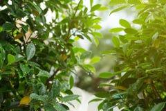 Het water van de regendaling op groene bladaard, abstract groen Royalty-vrije Stock Afbeelding