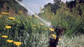 Het water van de sproeiernevel op bloemen op een hete de zomerdag Blauwe hemel met wolken op achtergrond Langzame Motie stock videobeelden