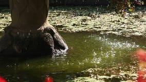Het water van de waterfontein het druipen stock footage
