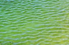 Het water van het moeras Stock Fotografie