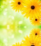 Het waterbezinning van bloemen Stock Foto's