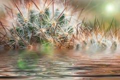 Het waterbezinning van cactusnaalden Stock Foto's