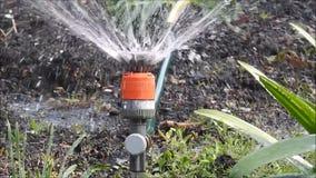 Het waterslang van de tuinsproeier het water geven de installaties van het bloembed stock videobeelden