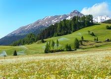 Het waterspuiten van de irrigatie in de berg van de Alpen van de Zomer Stock Foto's