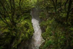 Het waterstroom van de Martvilicanion door bos stock afbeelding