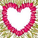 Het WATERVERF hart-vormige kader van de kroongrens MET GESCHILDERDE roze TULPEN Stock Afbeelding