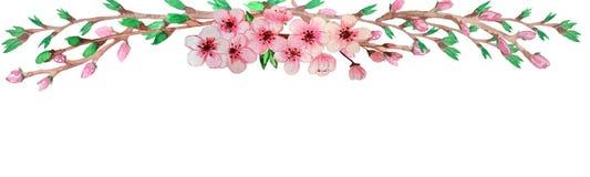 Het waterverfmalplaatje, dat door perfecte sakura wordt ontworpen vertakt zich met groene afgietsels en roze bloemen stock illustratie
