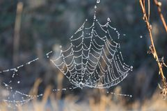 Het Web met dalingen van dauw Stock Fotografie