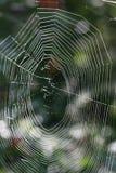 Het Web van de ochtend Royalty-vrije Stock Foto's