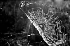 Het Web van de ochtend op een blad Royalty-vrije Stock Foto's