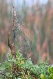Het Web van spinnen stock fotografie