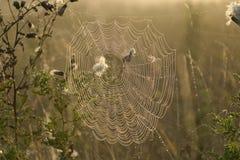 Het Web van spinnen Royalty-vrije Stock Fotografie