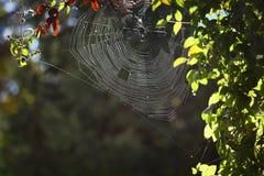 Het Web van spinnen royalty-vrije stock afbeelding