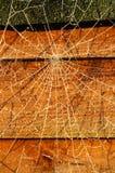 Het Web van spinnen stock foto