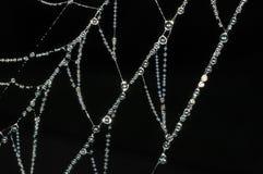Het Web van spinnen Royalty-vrije Stock Foto's