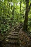 Het weelderige, groene gebladerte omringt de talrijke wandelingsslepen in Monteverde-Wolk Forest Reserve stock fotografie