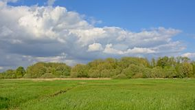Het weelderige groene zonnige landschap van het de lentemoerasland met bos op de achtergrond royalty-vrije stock foto