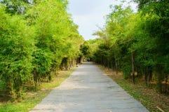 Het weg-bamboe, werd de voetpadden met gras bedekt langs de weg royalty-vrije stock afbeelding