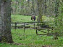Het weiden van bruin paard naast een omheining in donkergroen bos royalty-vrije stock fotografie