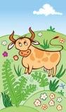 Het weiden van de koe in een weide Royalty-vrije Stock Afbeeldingen