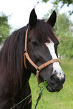 Het weiden van het paard bij een weide Stock Foto