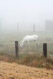 Het weiden van het paard in een zware mist royalty-vrije stock foto's