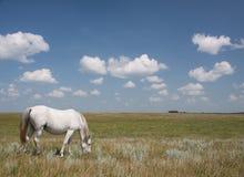 Het weiden van het paard op een gebied met wolken Stock Fotografie