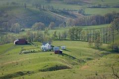 Het weiden van het vee op een berglandbouwbedrijf in Virginia Royalty-vrije Stock Foto