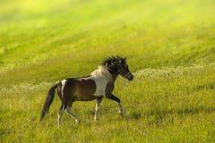 Het weiden van het paard op een weide stock foto