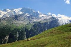 Het weiland van de berg Stock Afbeeldingen