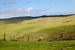 Het Weiland van het Eiland van het noorden Royalty-vrije Stock Foto's