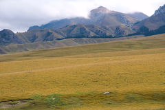 Het weiland van het hoogland stock fotografie