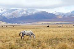 Het weiland van het hoogland stock foto's