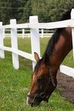 Het weiland van het paard Royalty-vrije Stock Foto