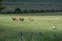 Het Weiland van het paard Royalty-vrije Stock Foto's