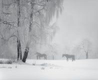 Het weiland van het paard in de winter Royalty-vrije Stock Afbeeldingen