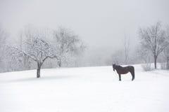 Het weiland van het paard in de winter Stock Foto